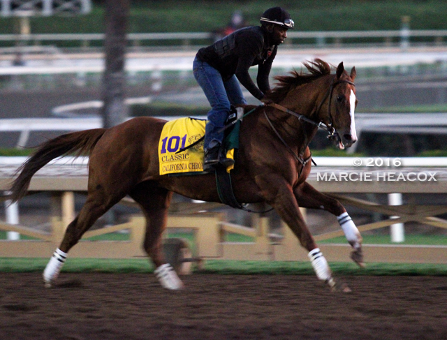 California Chrome Gallops