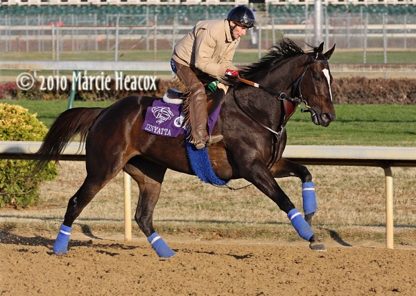 Zenyatta Gallops at Churchill