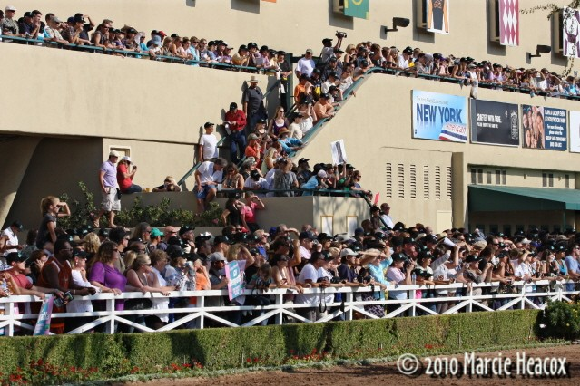 Hollywood Park Crowd